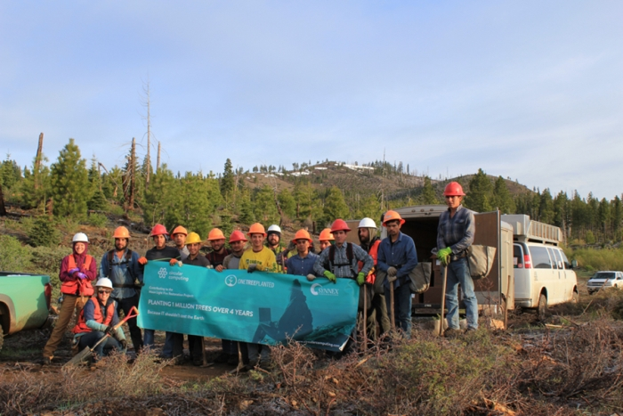 Planting its first 15000 trees